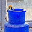 Blue Bottles<br/>(free)