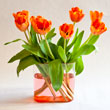 Orange Tulips<br/>(free)