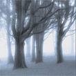 Spooky Trees in the Fog<br/>(free)