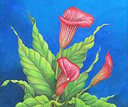 Calla Lilies-at2