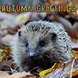 Autumn Greetings<br/>(free)