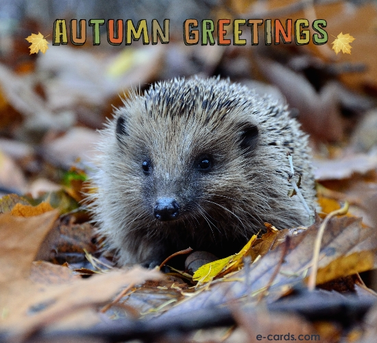 Autumn Greetings -  (7120017373)