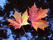 Floating Leaves<br/>(free)