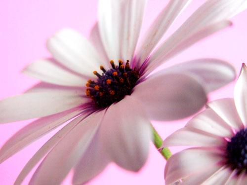 Think Pink - Meredith Haley Sonson (1609589153)