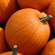 Big Pumpkin<br/>(free)