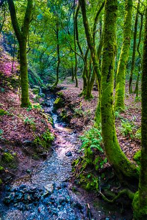 Hidden Forest - Robb Waterman (7120029122)