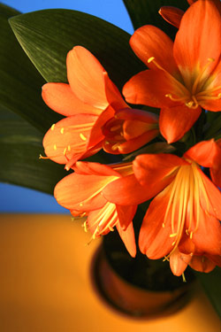 Orange Glow - Steve Armstrong (1558933210)